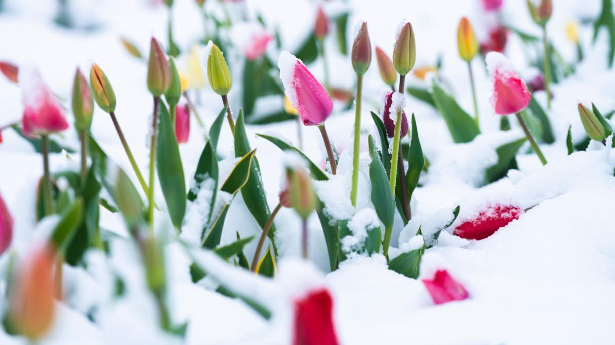 Te is örülsz ennek a szép tavaszi időnek? Már nem sokáig: 10-20 cm hóval tér vissza a tél