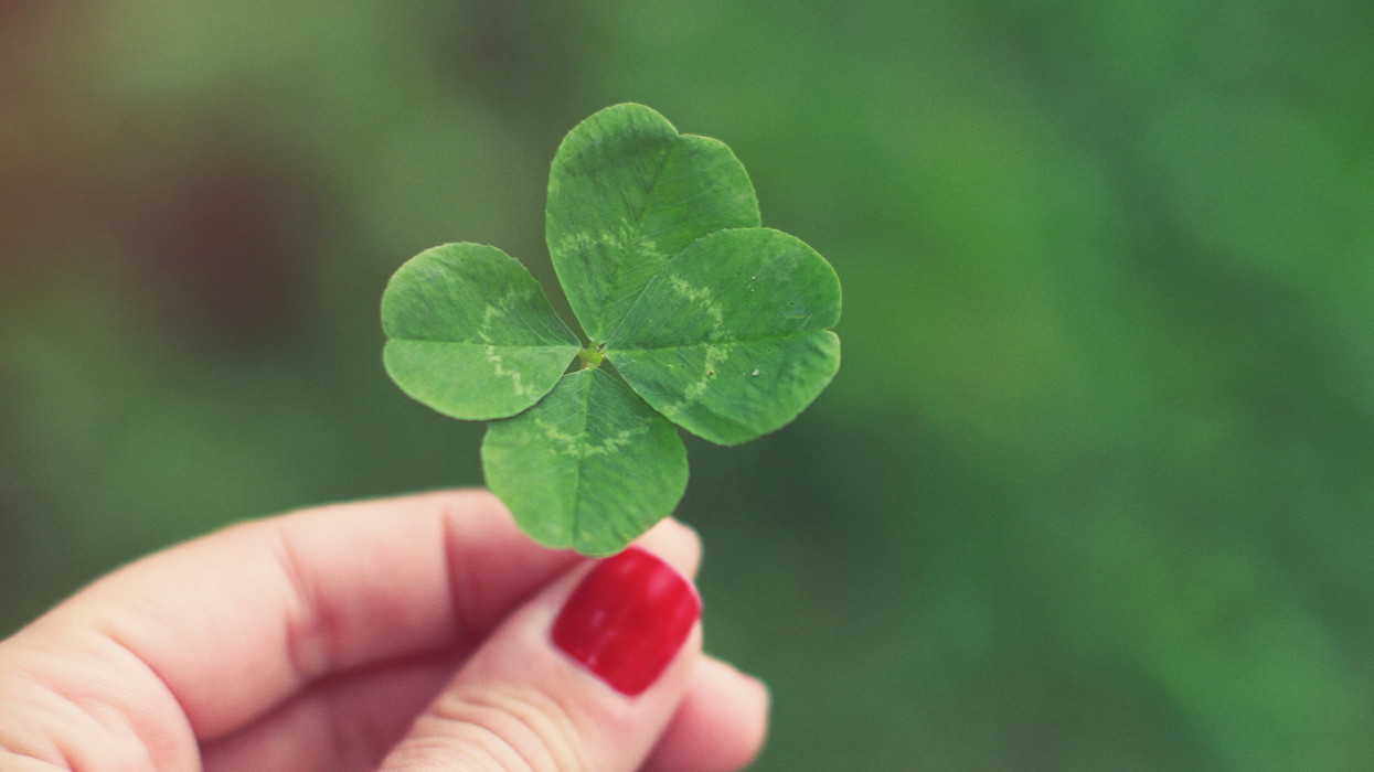 Womans hand with red nail polish holding a four leaf clover.