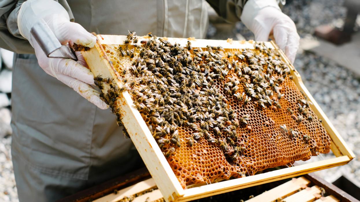 Bajban a magyarok kedvenc mézei: szinte teljesen eltűnhetnek a polcokról