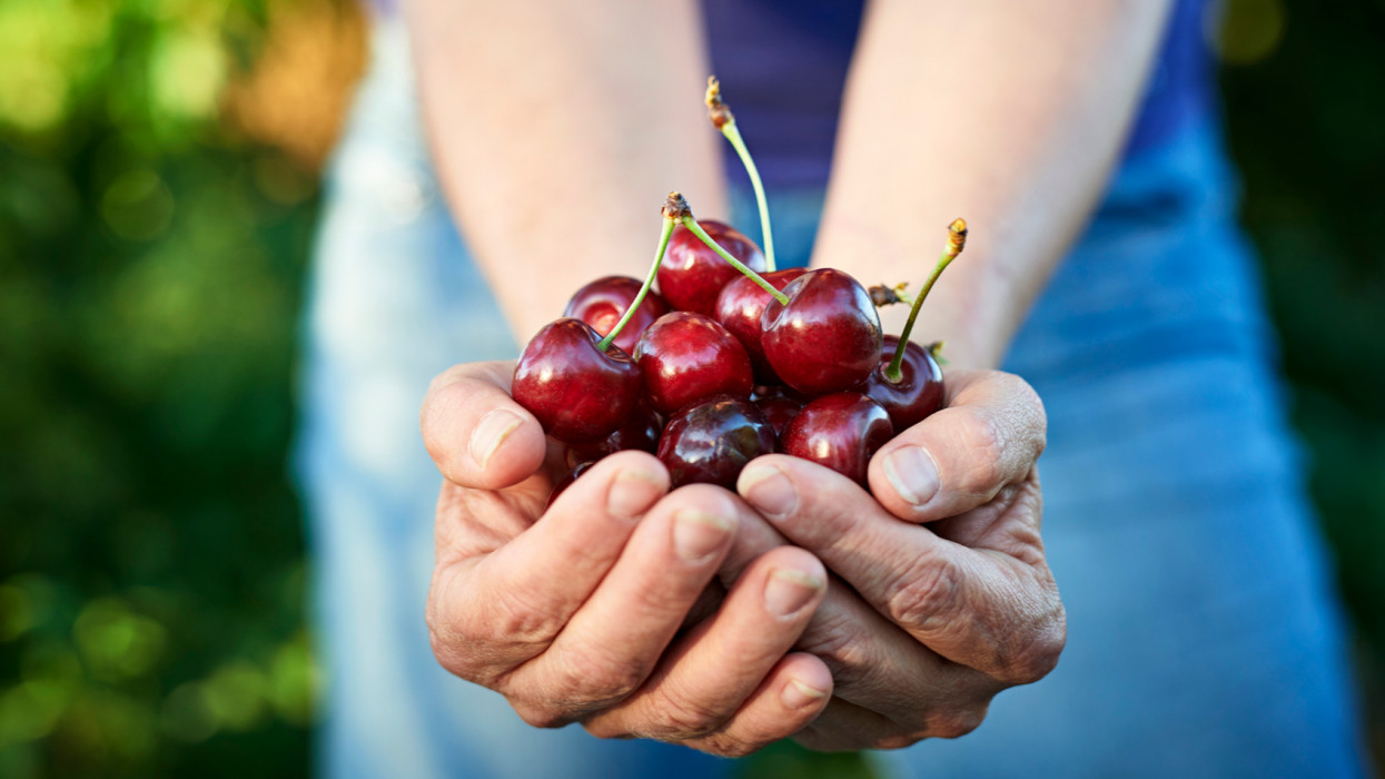 Mature woman holding cherries in her hands