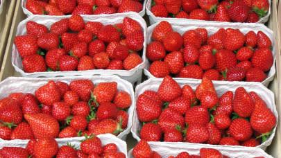 Ennyiért mérik idén a magyar epret a boltokban, piacokon