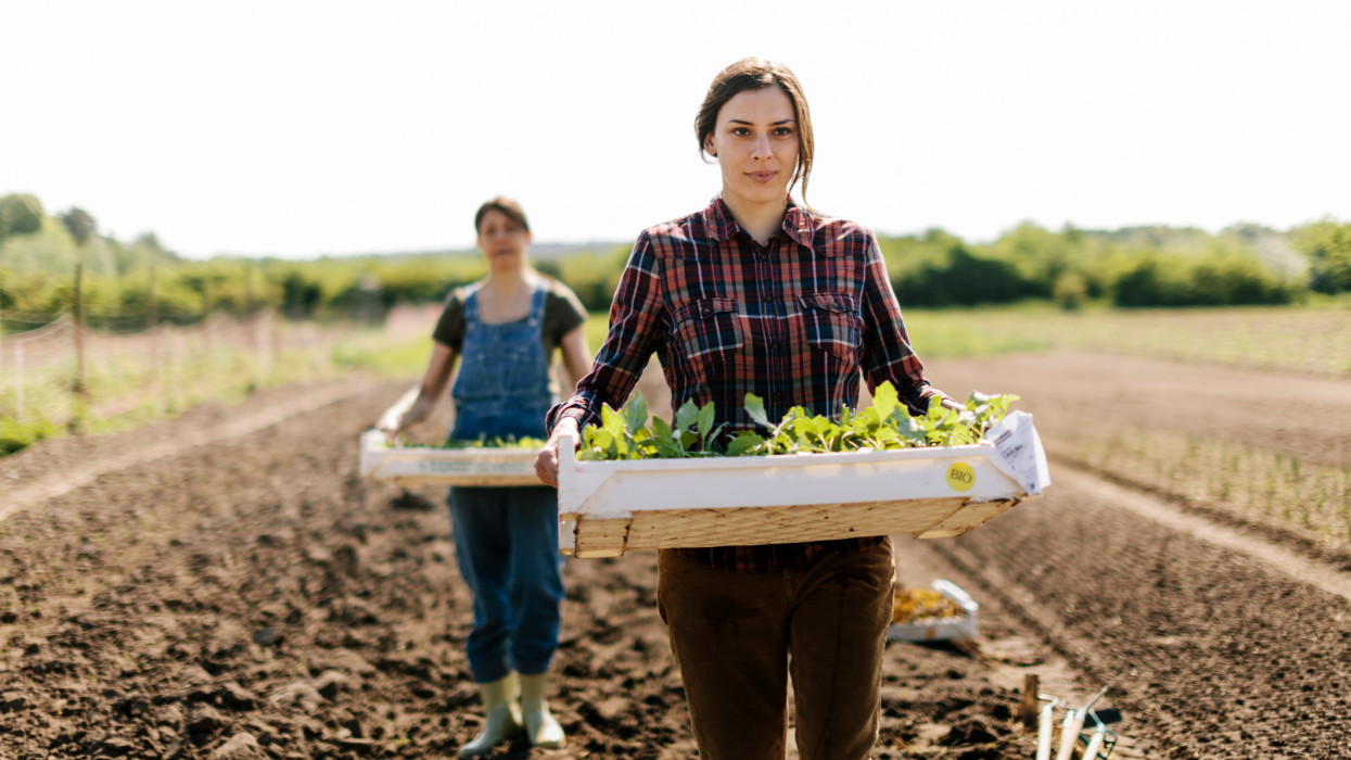Women Organic farmer working  farm. Women are carring trays with young Plants in field.