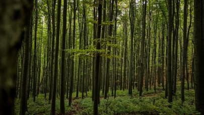 Küszöbön a kullancsinvázió: idén is rengeteg parazita lesz a magyar erdőkben