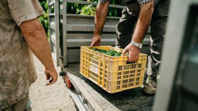Hazai zöldség-para jöhet a magyar boltokban: ezekre a friss magyar kedvencekre még várni kell