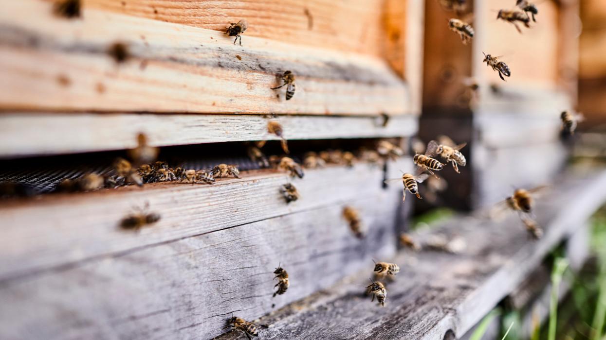 Drámai év vár a méhészekre: komoly hiány lehet akácmézből