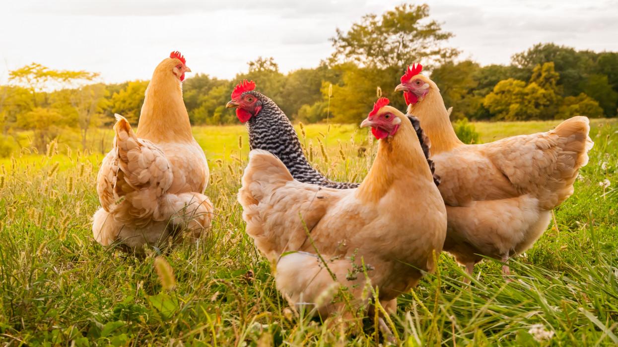Hús, tojás, tej: ezért lesz minden folyamatosan drágább még egy jó ideig