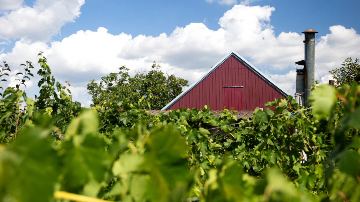 rural landscape with vineyard and red roof house with chimney