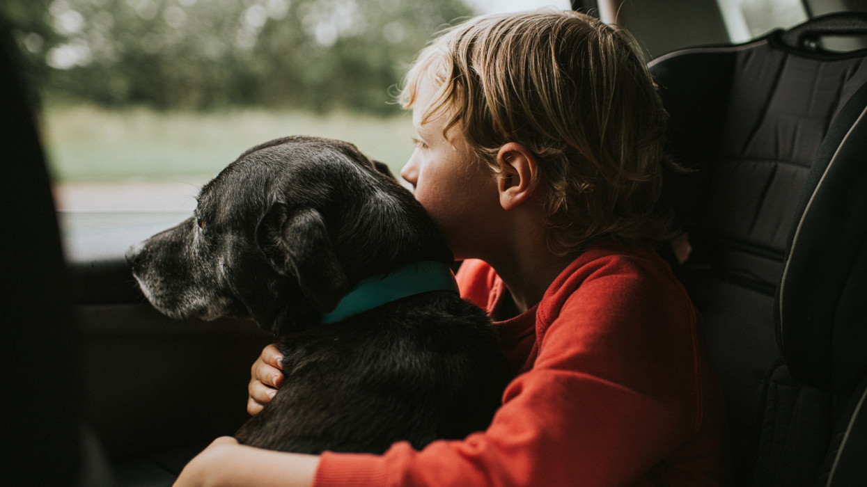 Cute boy, hugging his black Labrador cross dog, sitting in a booster seat in the back seat of a car. They both gaze out the window. Conceptual with space for copy.