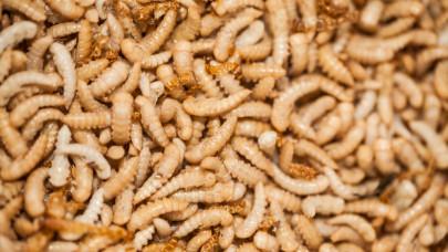 Ezért óriási biznisz a rovartenyésztés: hamarosan élelmiszerek tucatjait helyettesítheti