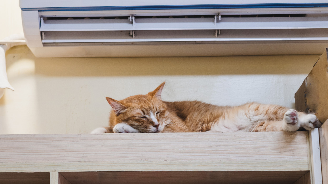 Cute ginger cat taking a nap under the air conditioner