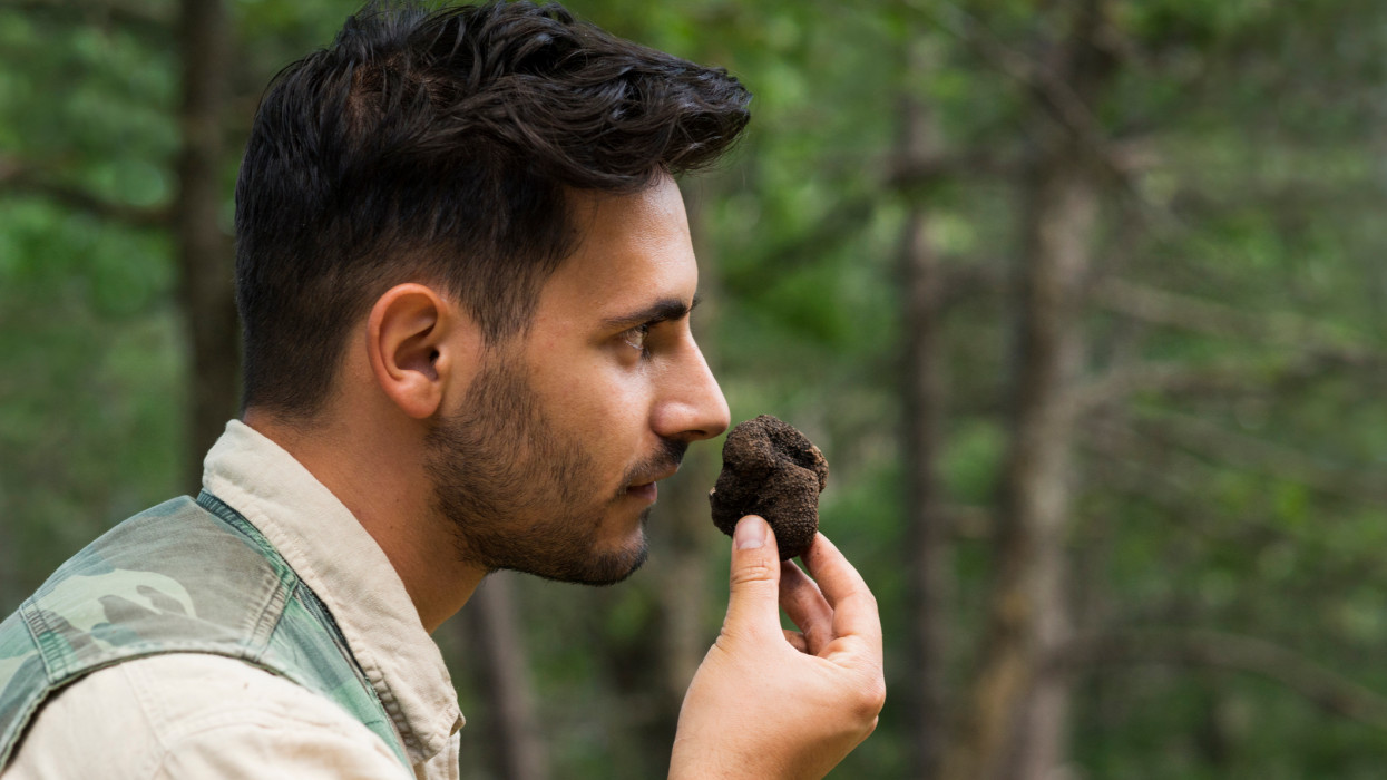 Male truffle hunter in 20s smells a newly collected truffle in the woods that his dogs dug up on a summer day, Abruzzo, Italy, Europe
