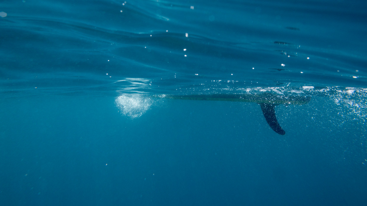 Taken from the underwater, view on the stnad up paddle board in cristal clean water