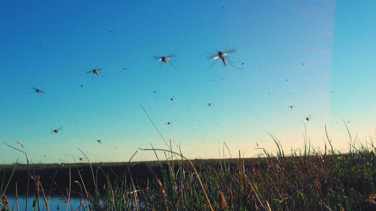 Gátat vetnének a szúnyoginváziónak: errefelé folytatódik az irtás