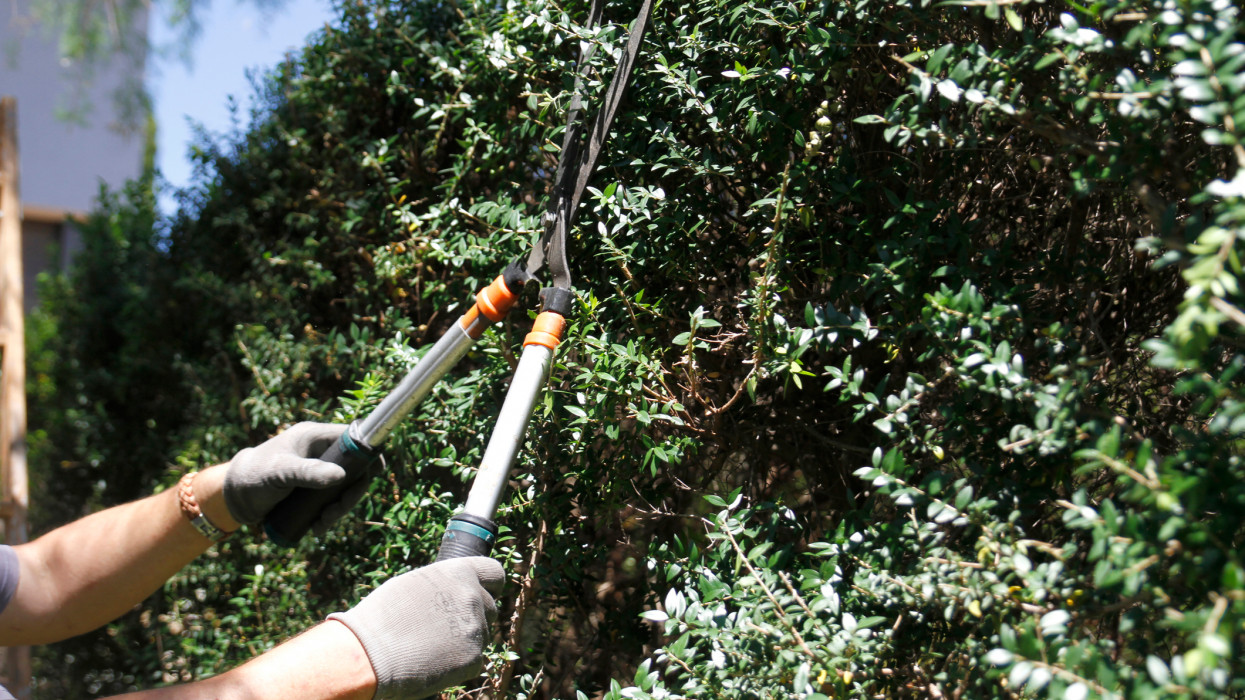 Low Angle View Of Man Cutting Branches Of Tree