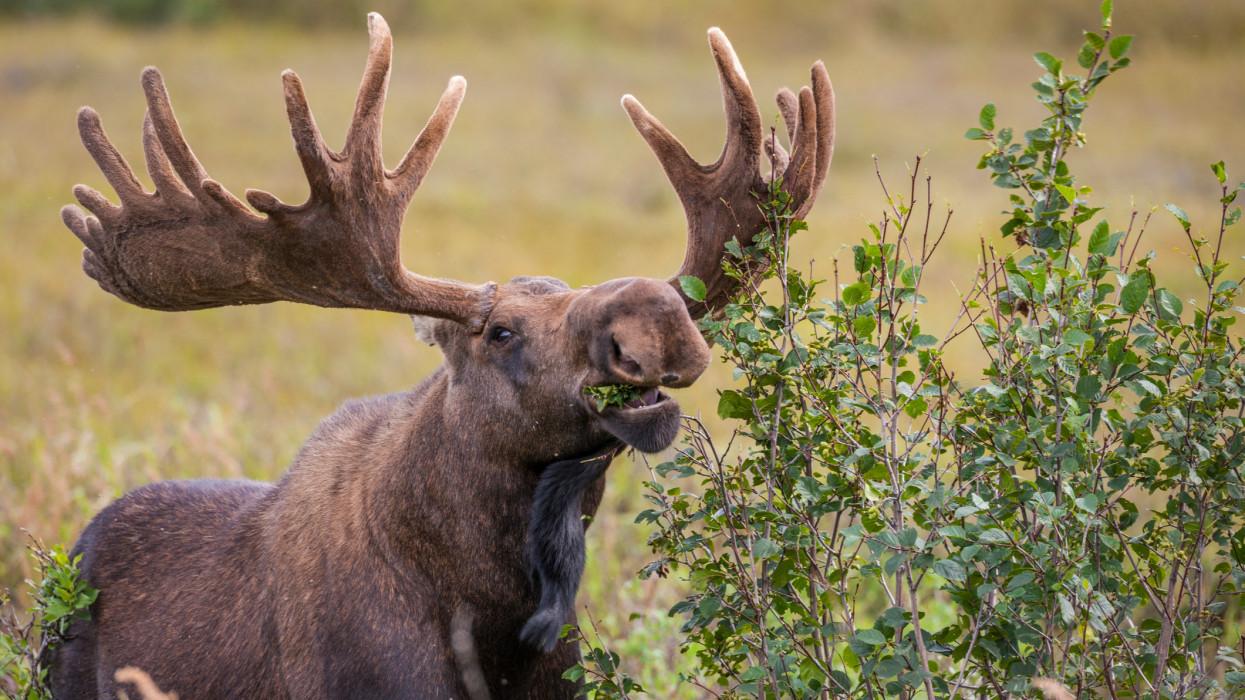 Denali National Park, interior, Alaska.