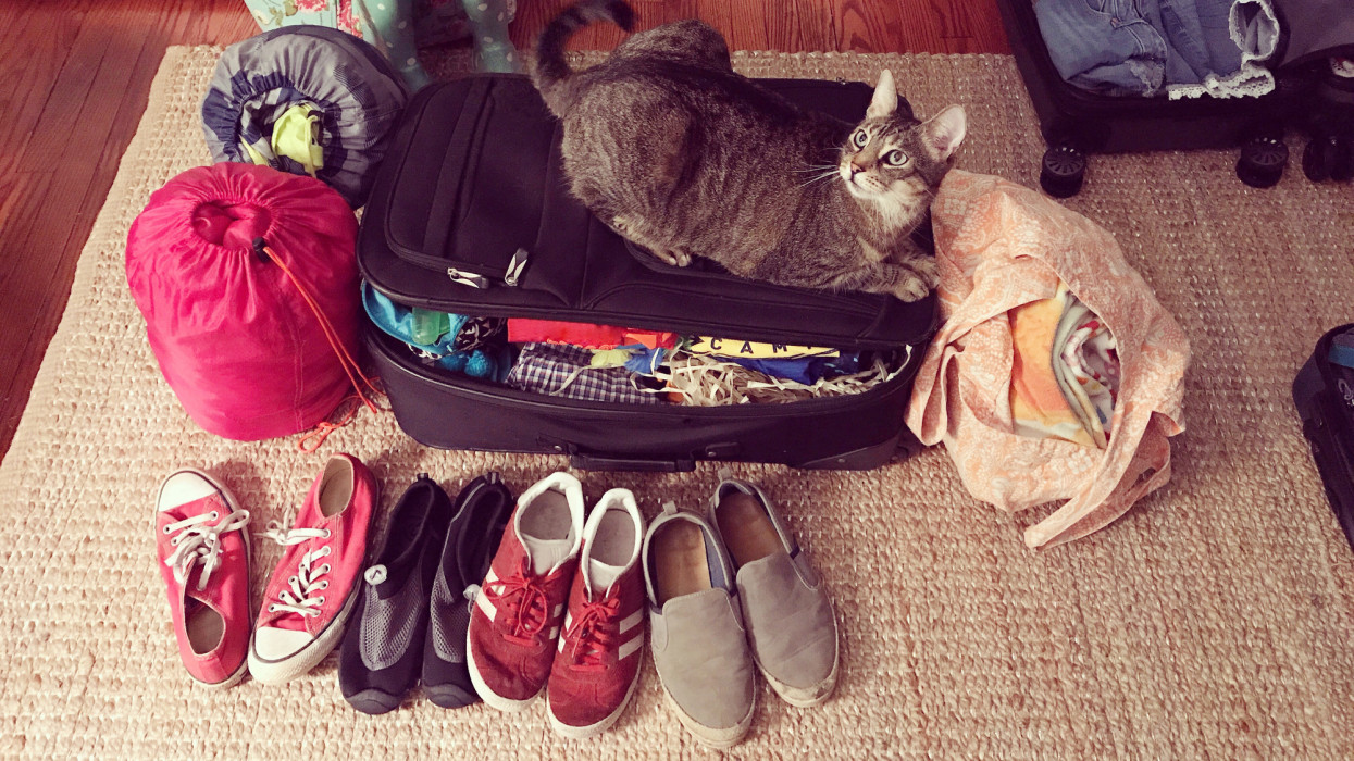 Cat sitting on a suitcase surrounded by sleeping bags, shoes, bags and suitcases.