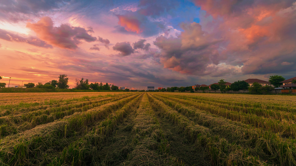 Storm Over The Farm Against Dramatic Sky During Sunset , Pathum Trani Province, Thailand, Asia