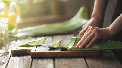 Mi mindenre jó az aloe vera? Aloe vera gél, aloe vera ital, aloe vera hol kapható? Aloe vera kapszula hol kapható?