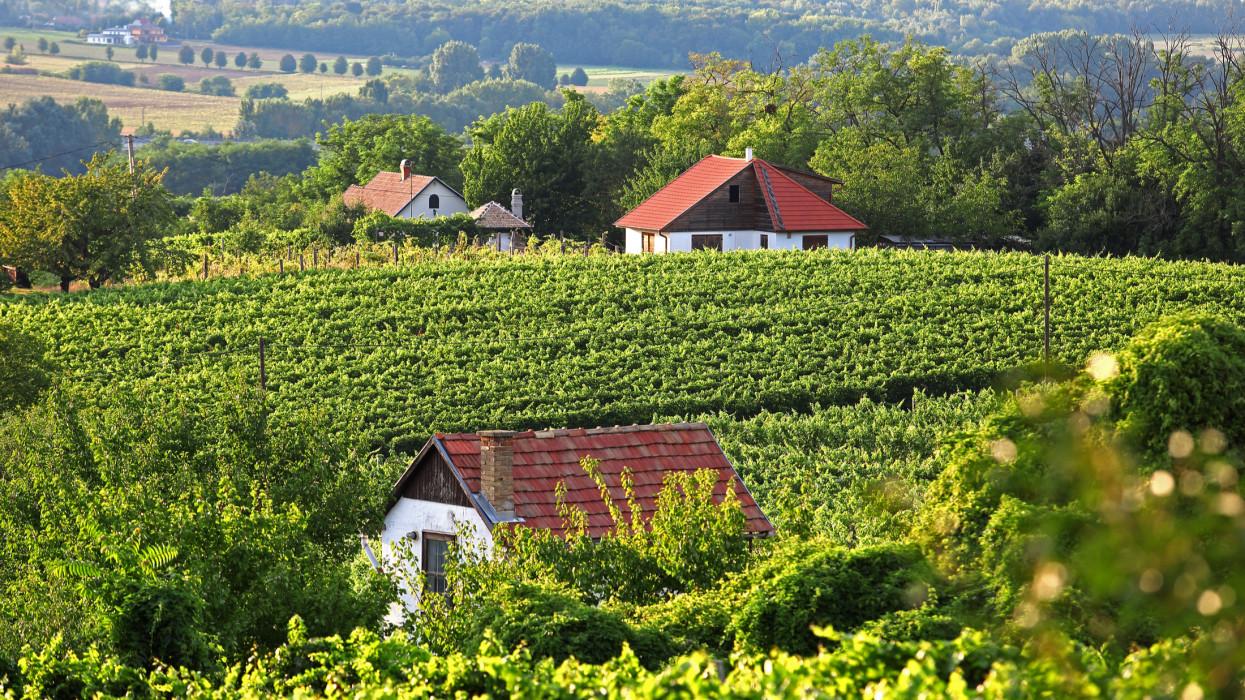 Itt vesznek most tömegével családi házat a pestiek vidéken: tudnak valamit?