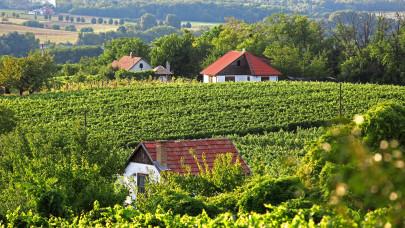 Miért érdemes borvidékre költözni? Egyáltalán nem a borok miatt találják meg itt új lakhelyüket